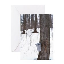 Collecting maple tree sap Greeting Card
