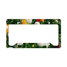 Dahlia flowers License Plate Holder