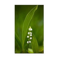 Convallaria majalis (Lily of  Rectangle Car Magnet