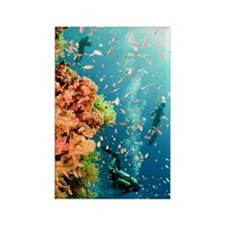 Coral Reef Red Sea, Ras Mohammed Rectangle Magnet