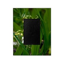 Convallaria majalis (Lily of the Val Picture Frame