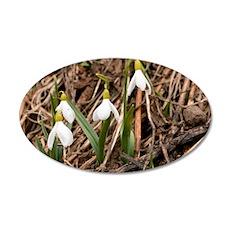 Caucasian Snowdrop (Galanthu 35x21 Oval Wall Decal