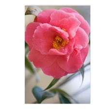Camellia japonica Postcards (Package of 8)
