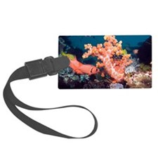Blotcheye soldierfish and soft c Luggage Tag