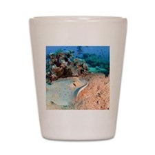Blue-spotted stingray Shot Glass
