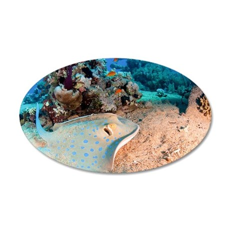 Blue-spotted stingray 35x21 Oval Wall Decal