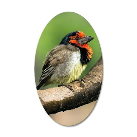 Black-collared barbet 35x21 Oval Wall Decal