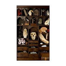 A cabinet of Curiosities Rectangle Car Magnet