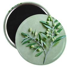 Olive Branch on green background Magnet