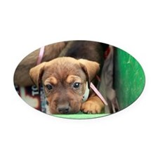 Puppy in a box 2 Oval Car Magnet
