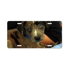 Blue eyed cutie Aluminum License Plate