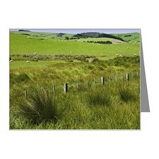 New Zealand, South Island, s Note Cards (Pk of 20)