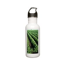 Soy bean fields, Argen Stainless Steel Water Bottle