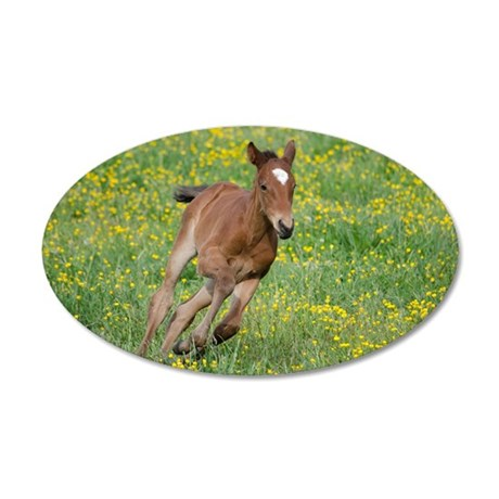 Galloping Foal 35x21 Oval Wall Decal