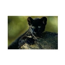 BLACK AFRICAN LEOPARD CUB BY ROCK Rectangle Magnet
