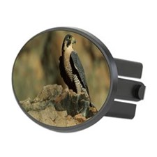 PEREGRINE FALCON ON ROCK IN NORTH Hitch Cover
