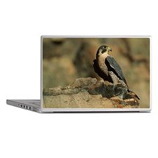 PEREGRINE FALCON ON ROCK IN NORTH AME Laptop Skins