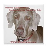 Cute Rescue weimaraner Tile Coaster