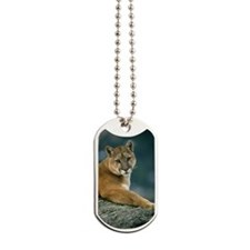 COUGAR IN WESTERN MONTANA Dog Tags