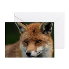 Red Fox Watches and Listens Greeting Card