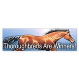 Winners (Bay) Bumper Bumper Sticker