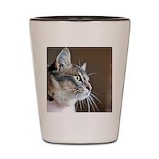 Milo the Munchkin Cat Shot Glass