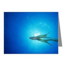 UNDERWATER VIEW OF BLANKET O Note Cards (Pk of 10)