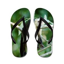 WHITE THROATED CAPUCHIN MONKEY Flip Flops