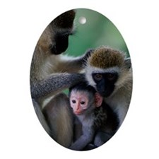 BLACK FACED VERVET MONKEY GROOMING Y Oval Ornament