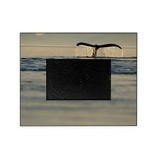 Tail of humpback whale Megaptera nov Picture Frame