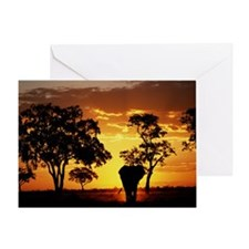Elephant Loxodonta africana walking, Greeting Card