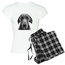 Blue weimaraner dog staring Pajamas