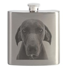 Blue weimaraner dog staring Flask