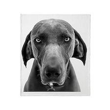Blue weimaraner dog staring Throw Blanket