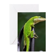 Lizard (Anole) Greeting Card