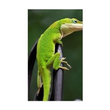 Lizard (Anole) Decal