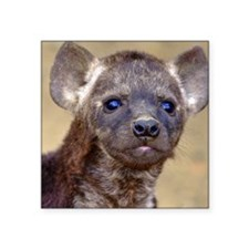 "Hyena cub in the Kruger Nat Square Sticker 3"" x 3"""