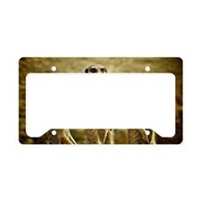 Three Meerkats standing License Plate Holder
