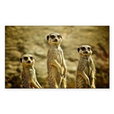 Three Meerkats standing Decal