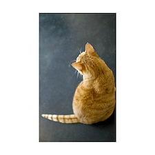 Orange, short hair, tabby cat  Decal