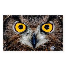 Eagle owl eyes Decal