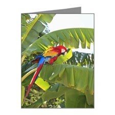 A Scarlet Macaw Ara Macao In Note Cards (Pk of 20)