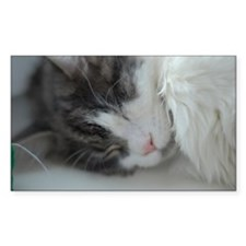 Maine coon cat sleeping Decal