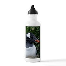 gentoo penguin gold ha Water Bottle