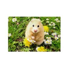 Golden syrian hamster on a spring Rectangle Magnet