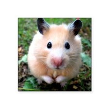 """Syrian hamster outdoors Square Sticker 3"""" x 3"""""""