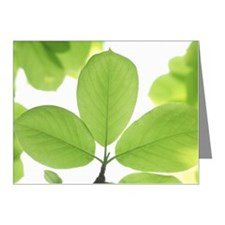 Close-up of leaves Note Cards (Pk of 10)