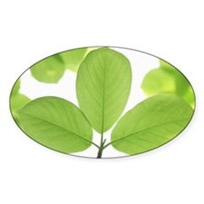 Close-up of leaves Decal