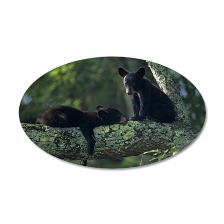 Black bear cubs in tree, Gre 35x21 Oval Wall Decal
