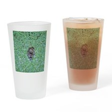 Two turtles Drinking Glass